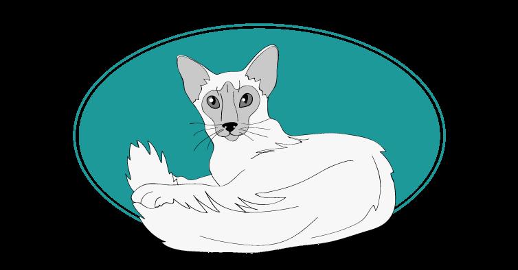 Javanais chat animal races : tout savoir sur les chats