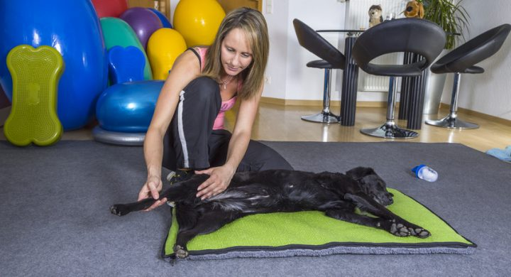 kinesitherapie-animaux-assurance-chien-chat