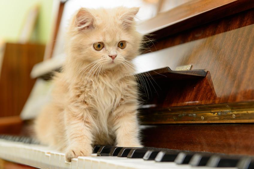 La musique pour les chats : Actualité Assur O' Poil