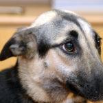 Langage corporel chien : Comprendre le langage corporel du chien
