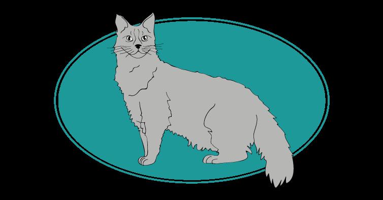 Laperm chat animal races : tout savoir sur les chats