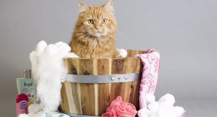 Comment laver son Chat : Entretien