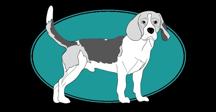 le-beagle-assuropoil