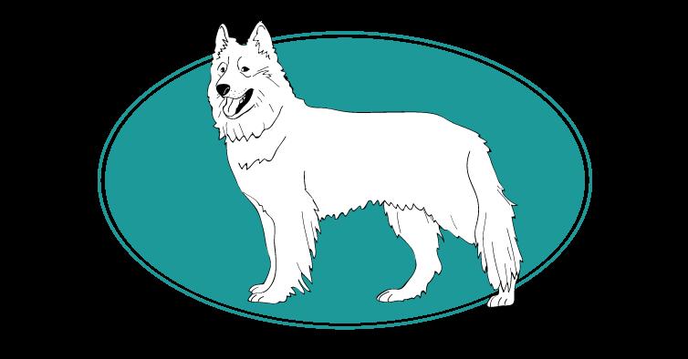 le-berger-blanc-suisse-assuropoil