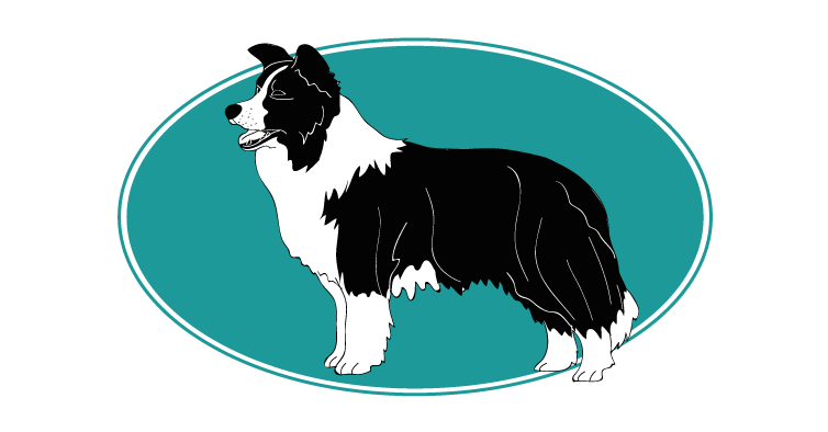 le-border-collie-assuropoil
