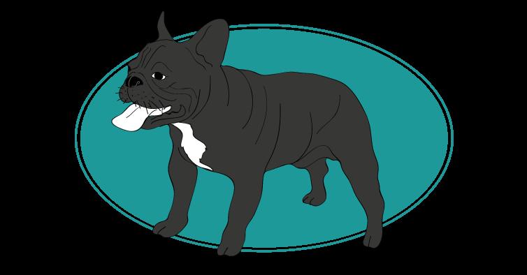 le-bouledogue-francais-assuropoil