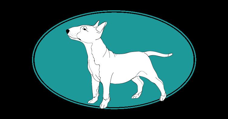 le-bull-terrier-assuropoil