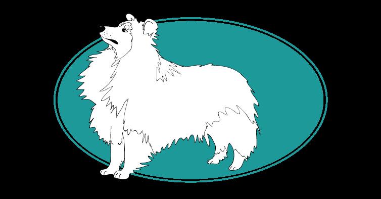 le-chien-de-berger-des-shetland-assuropoil