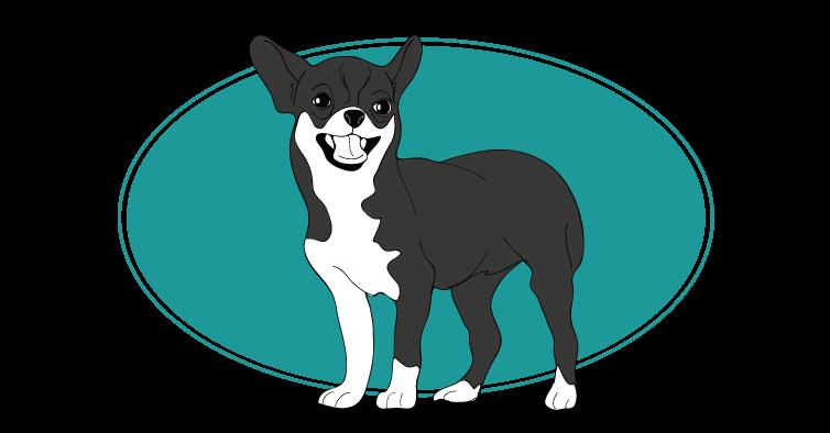 le-chihuahua-assuropoil