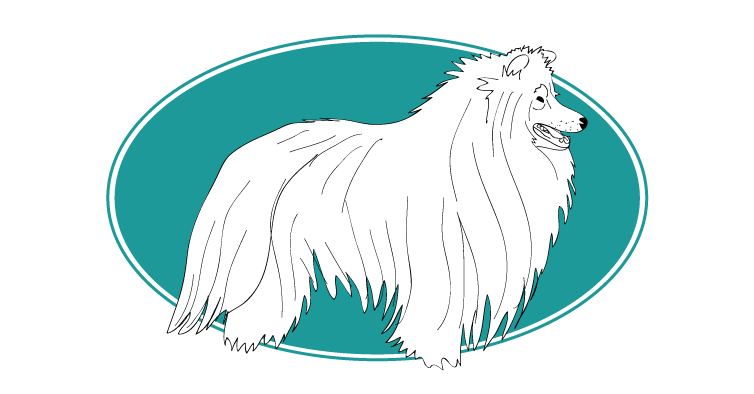 le-collie-a-poil-long-colley-assuropoil