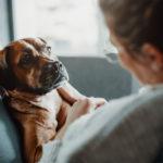 Le droit des animaux : ou en est leur statut juridique