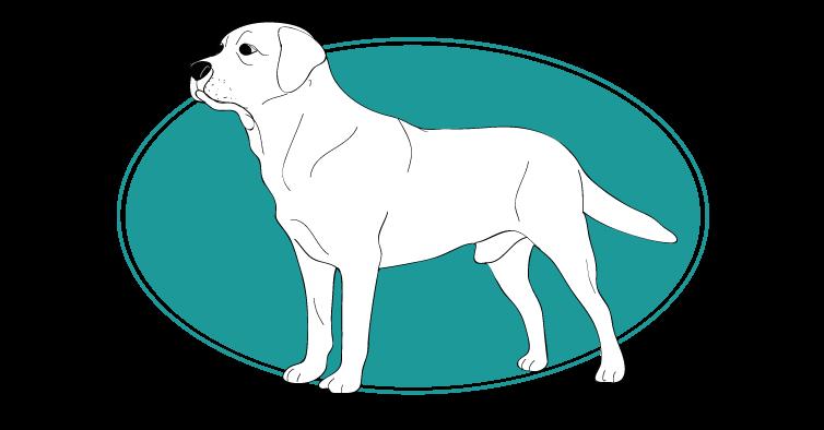 le-labrador-assuropoil