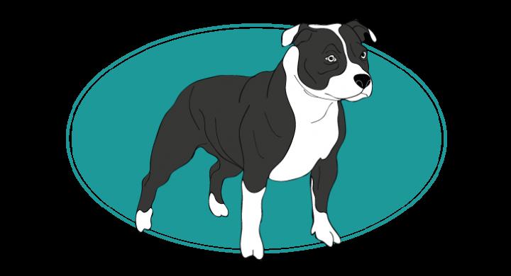 le-staffordshire-bull-terrier-assuropoil