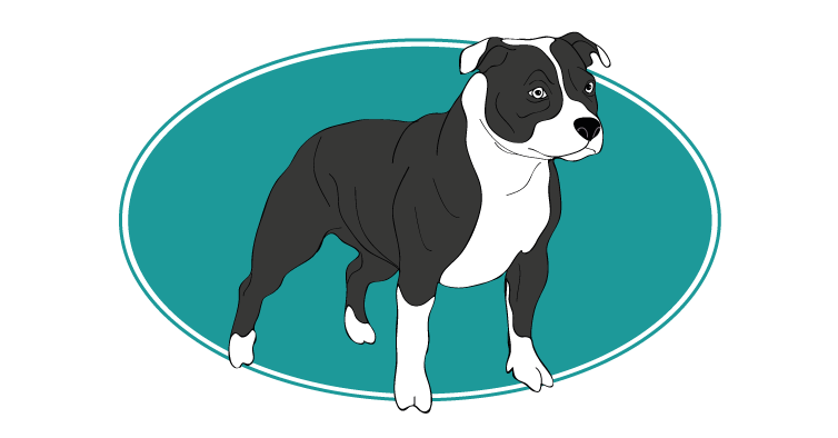le-staffordshire-bull-terrier-assuropoil