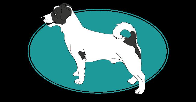 le-terrier-jack-russel-assuropoil
