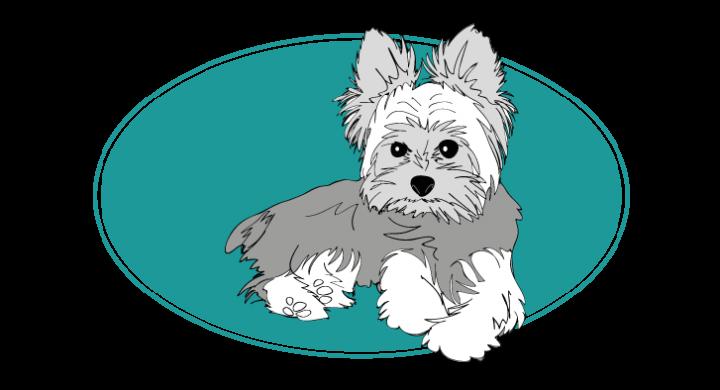 le-yorshire-terrier-assuropoil