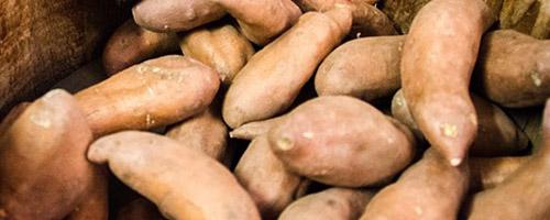 legumes-chien-patates-douces