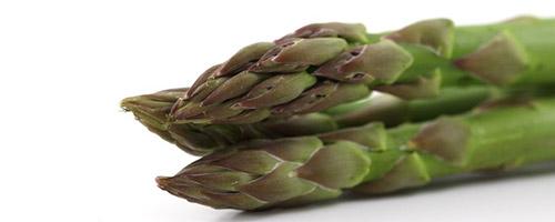 Alimentation pour chien : Légumes pour chien, donner des asperges à son chien