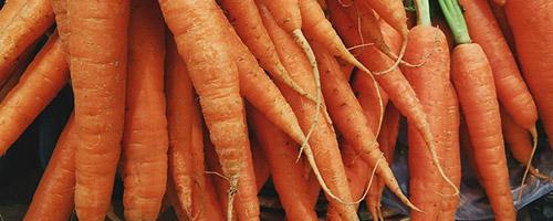 legumes-pour-chien-carottes