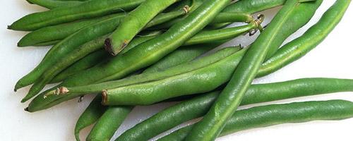 legumes-pour-chien-haricots
