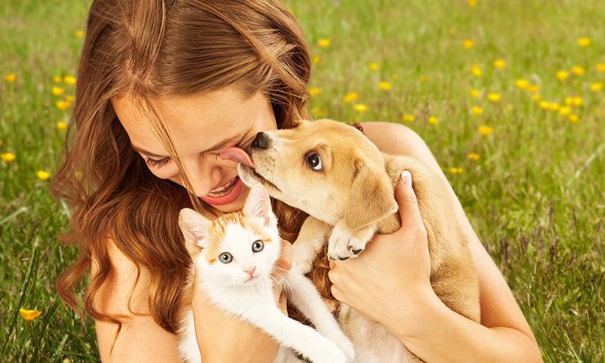 Actualité animaux : Les animaux et la chaleur