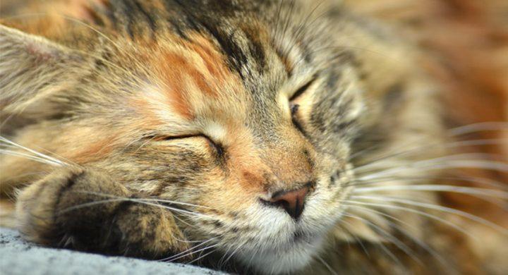 Santé Prévention Chat : Les chats et la chaleur