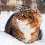 Les chats peuvent-ils attraper avoir froid
