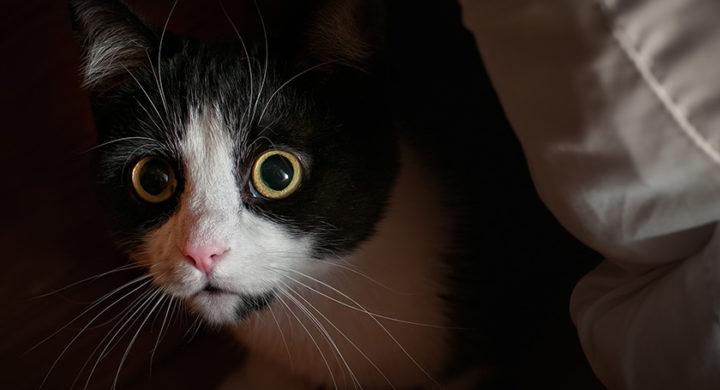 Les chats sentent les esprits