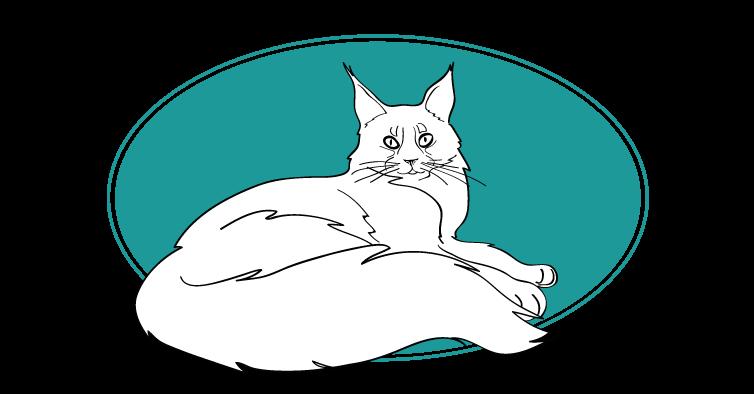 Maine coon chat races animal : tout savoir sur les chats