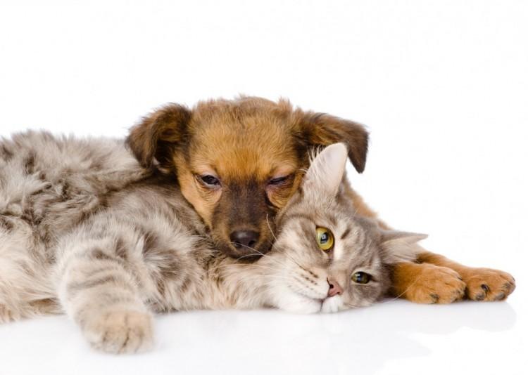 Maladie de peau du chien, Maladie de peau du chat, Assurance animaux Assur O'Poil