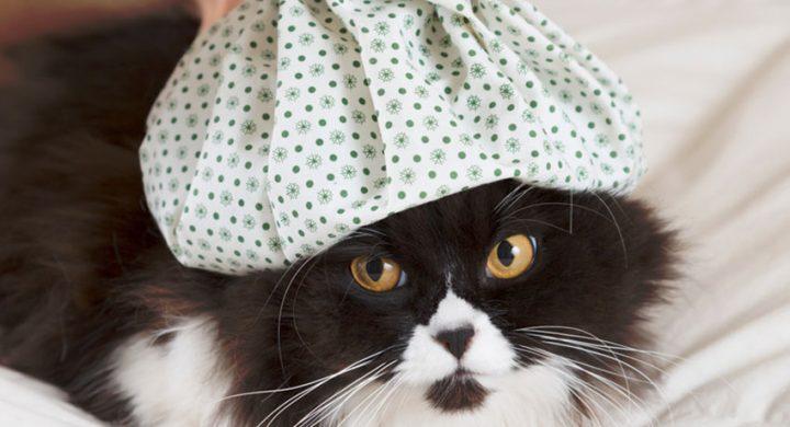 Sante Prévention Chat : Maladie des chats : Connaissez-vous les maladies les plus répandues chez le chat