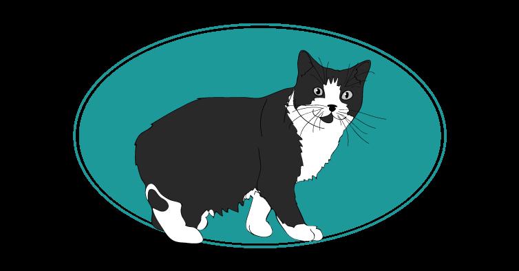 Manx chat animal races : tout savoir sur les chats
