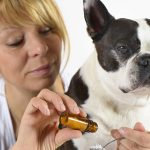 Médicament humain pour chien, medicament humain pour chat : Puis-je donner un médicament humain à mon animal