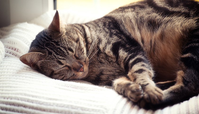 Mon chat dort tout le temps