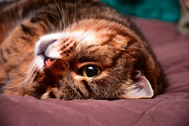 Bonjour - bonsoir - Page 4 Mon-chat-est-maigre-sante