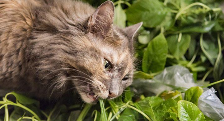 Mon chat mange mes plantes, que faire ?
