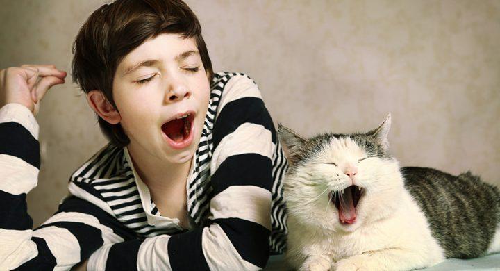 Mon chat miaule la nuit, mon chat me réveille la nuit, comportement chat