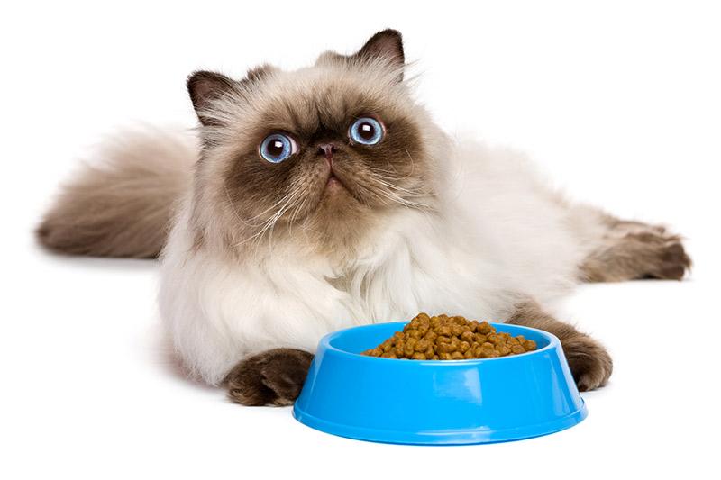 Mon chat ne mange plus : Nourriture