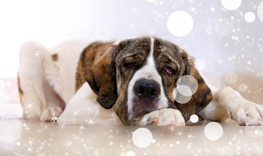 Mon chien à la diarrhée, santé du chien