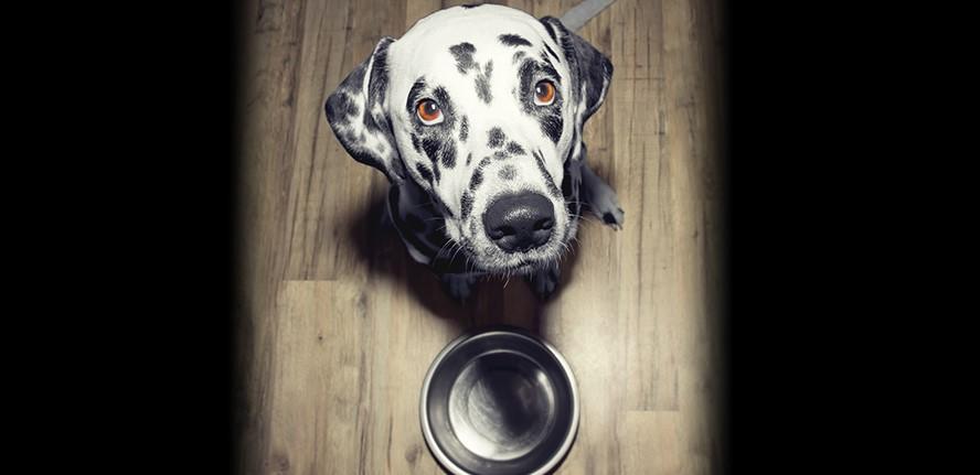 Alimentation chien : Mon chien a toujours faim, mon chien mange tout
