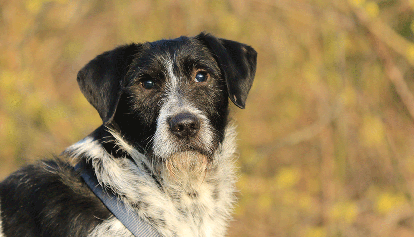 Mon chien devient aveugle, vivre avec un chien aveugle