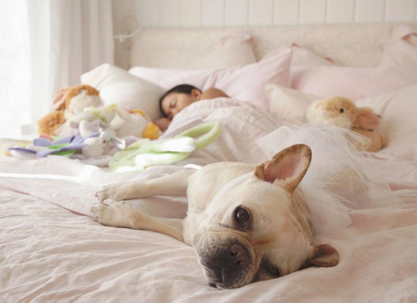 Education chien : Mon chien dort avec moi