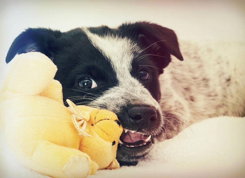 Education chien : Mon chien mange tout