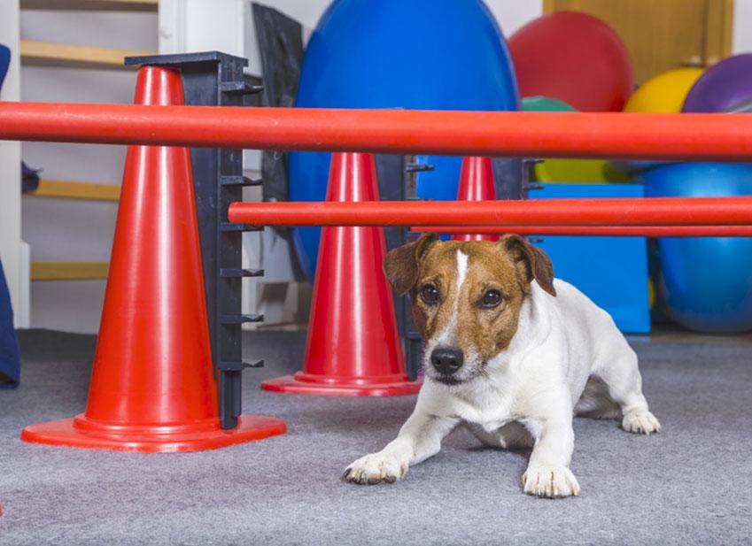 Education chien : Mon chien saute sur les gens