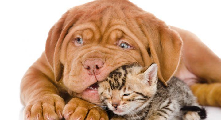 morsure-de-chien-de-chat-assuropoil-assurance-animaux