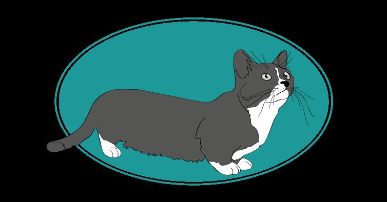 Munchkin chat animal races : tout savoir sur les chats
