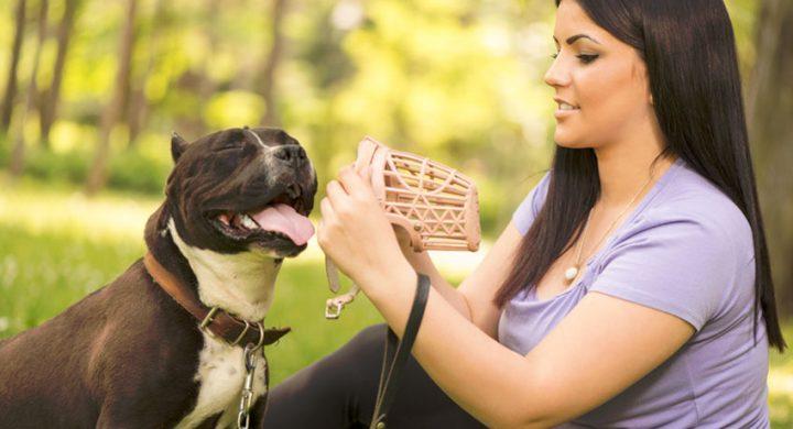 Education chien : habituer son chien au port de la muselière pour chien