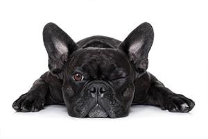 Blog chien: devis et tarif gratuit
