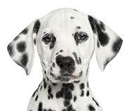 Mutuelle animaux : assurances animaux pour chien remboursement
