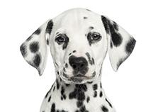 Mutuelle animaux : assurances animaux chien remboursé et heureux